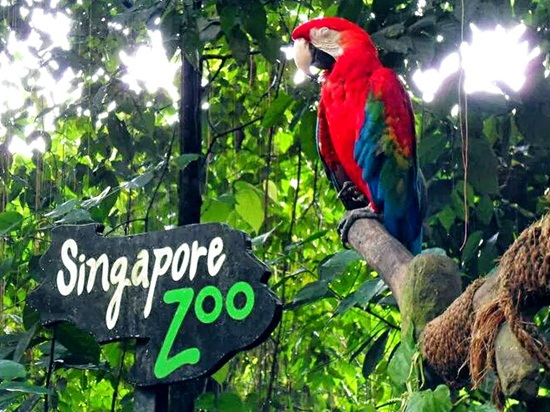 Kinh nghiệm tham quan Sở thú Singapore Zoo