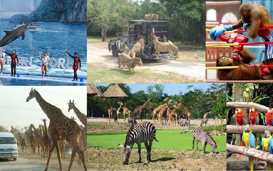 Kinh nghiệm đi Safari World Bangkok Thái Lan